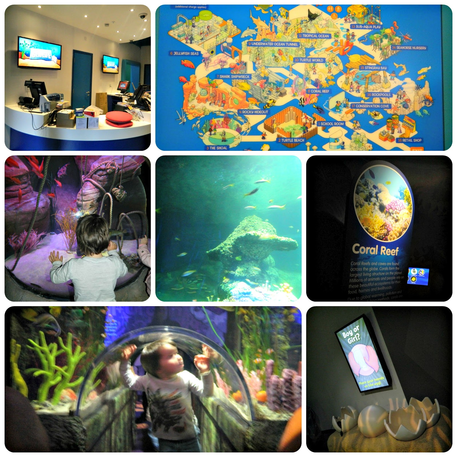 A Sneak Peek at the SEA LIFE Centre Manchester | Red Rose Mummy