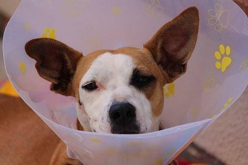 como curar heridas linear unit perros