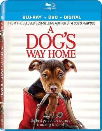 A Dogs Way Home (2019) Dual Audio Hindi ORG 720p BluRay 800MB ESubs Movie Download