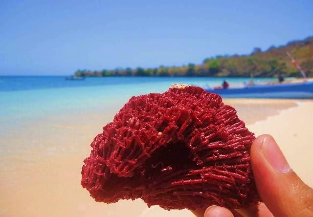 Rute menuju pantai pink di lombok