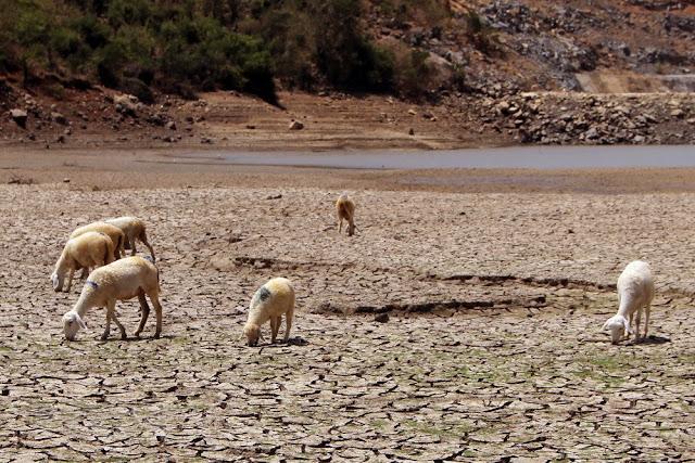 Kết quả hình ảnh cho sheep