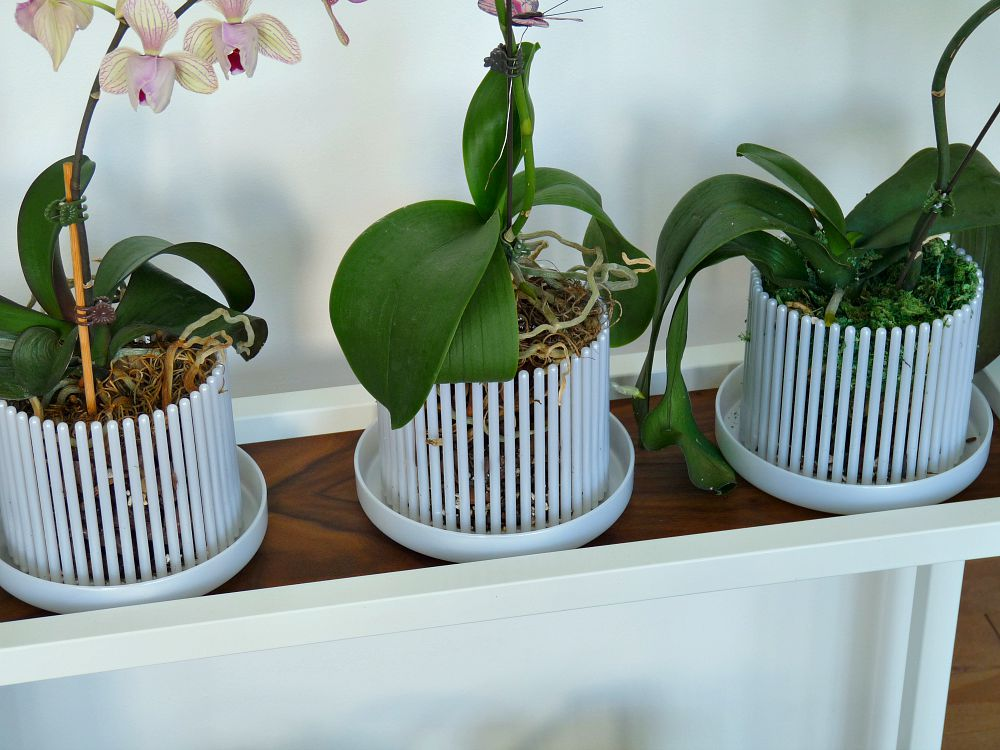 What Kind of Pot to Use for Orchids