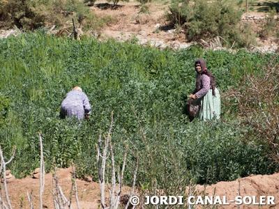 Mujeres bereber en el campo