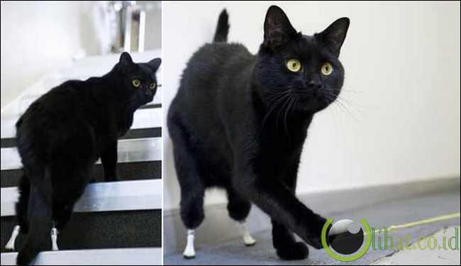 Oscar si Kucing