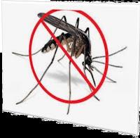 ইদুর, তেলাপোকা, টিপস,মাছি, ছারপোকা, টিকটিকি,মশা,cockroach, tips, flies, grasshoppers, lizards, mosquitoes,rats