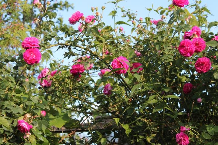 roślinność na zdjęciach