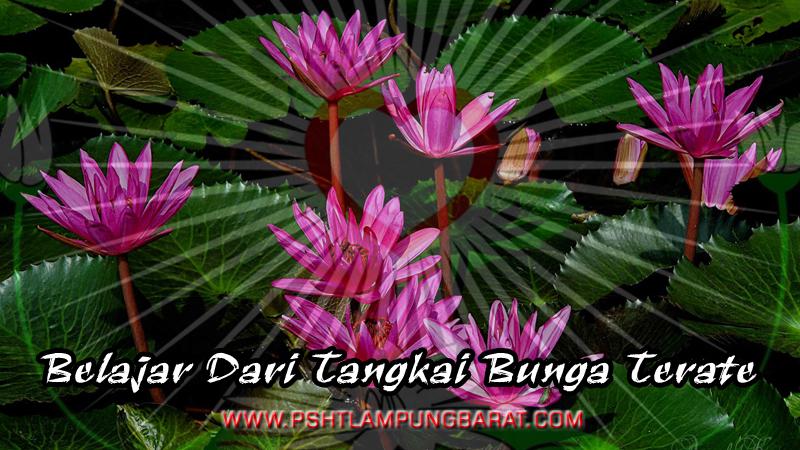 Download 900 Gambar Bunga Terate Psht Paling Keren