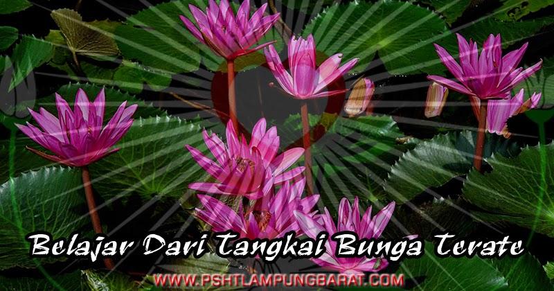 Belajar Dari Tangkai Bunga Terate Psht Cabang Lampung Barat
