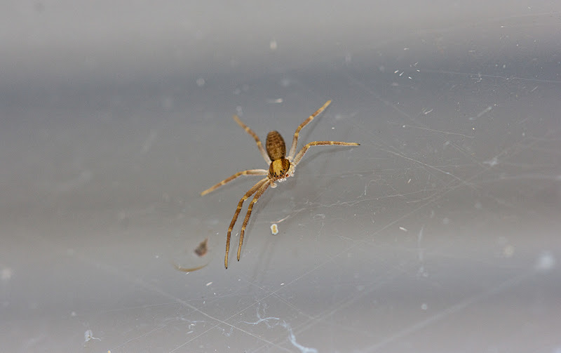 My Family and Other Animals: Some Spiders Only Have Six Legs