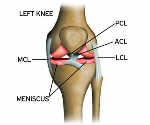 Sports And Acl Injuries  Acl Injuries