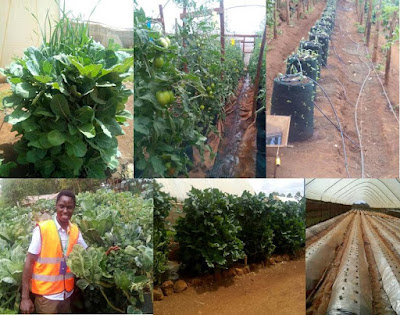 profitable farming in Kenya