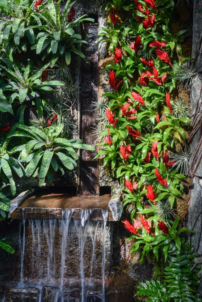 jardín tropical con fuente, cascada de agua y bromelias de flor roja