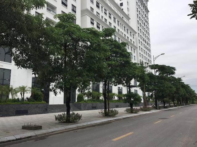 Hệ thống cây xanh bao quanh tại Eco city