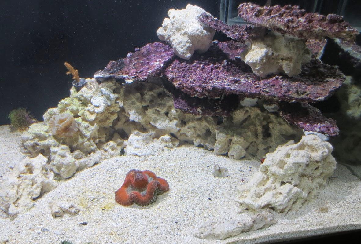 Real Reef Shelf Rock: Recreate the Tonga Look and Save a ...