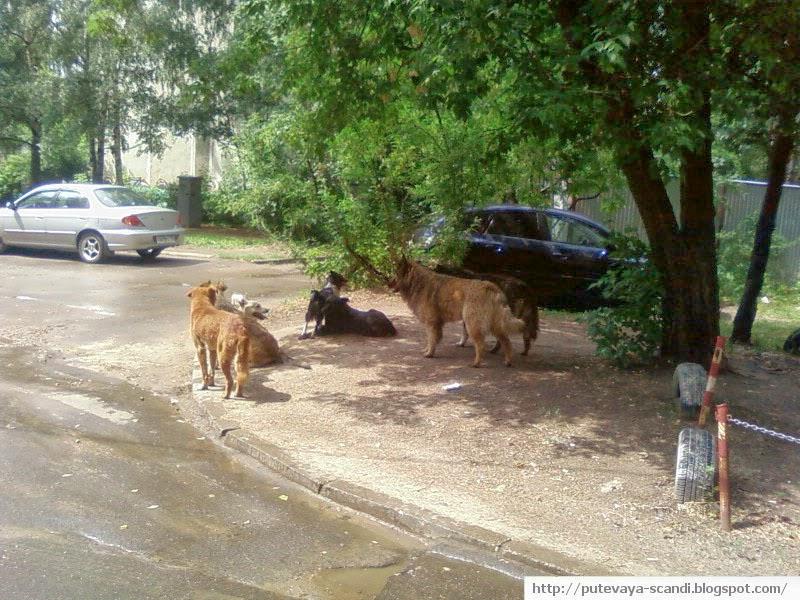 собаки в тени