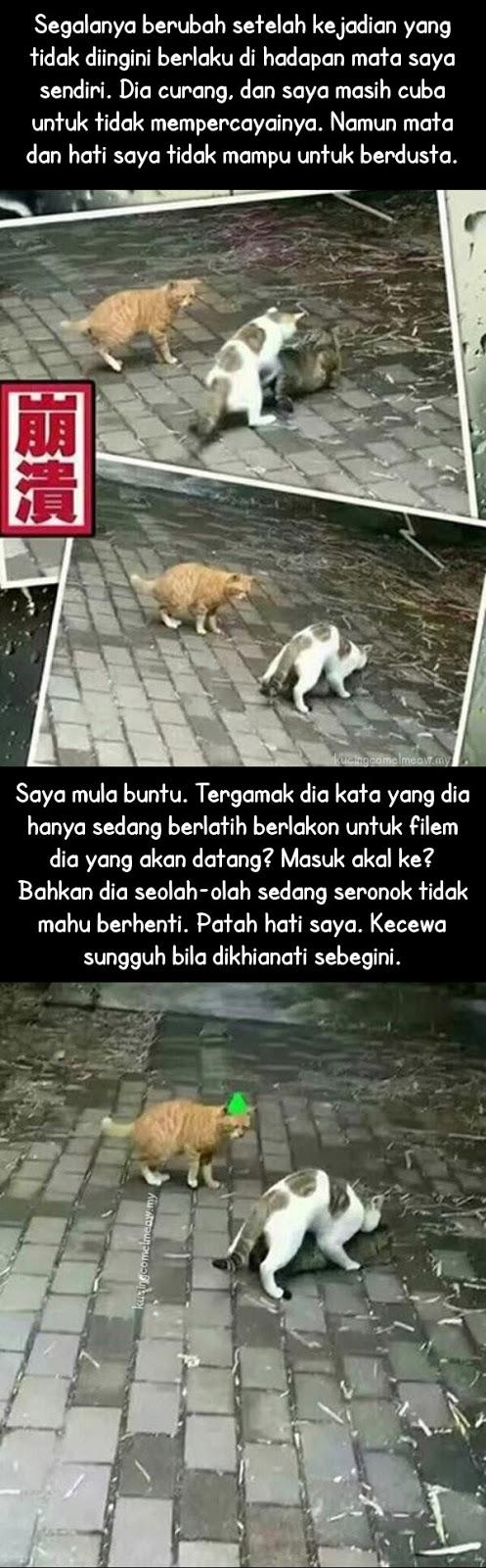 Kisah Kucing Patah Hat...