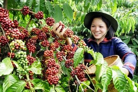 Kopi Sumatera