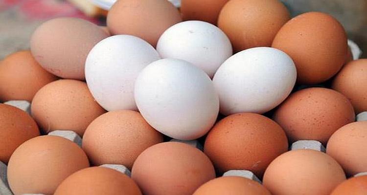 ما هو الفرق بين البيض البني و البيض الأبيض