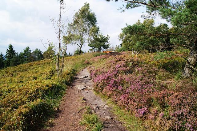 Durch die Heidelandschaft des Velmerstot führt ein Wanderweg