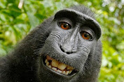 The Selfie Monkey Indonesia Selected So 'Person of the Year'