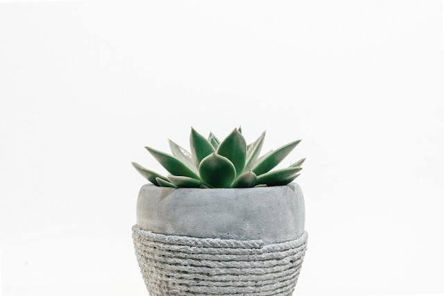 Potted-Succulent-Scott-Webb-via-Unsplash