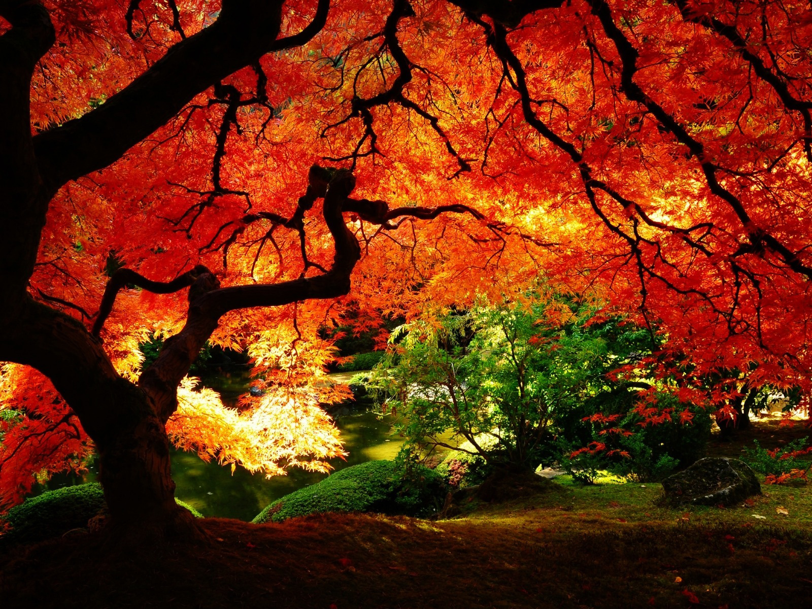 Red Leaves Beautiful Fall Landscapes HD Wallpapers