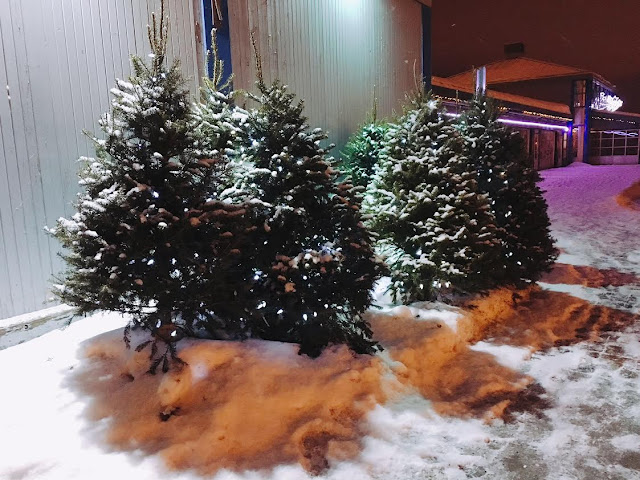 Christmas trees in Québec City