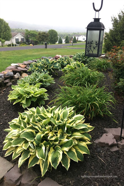 gardening tips grow