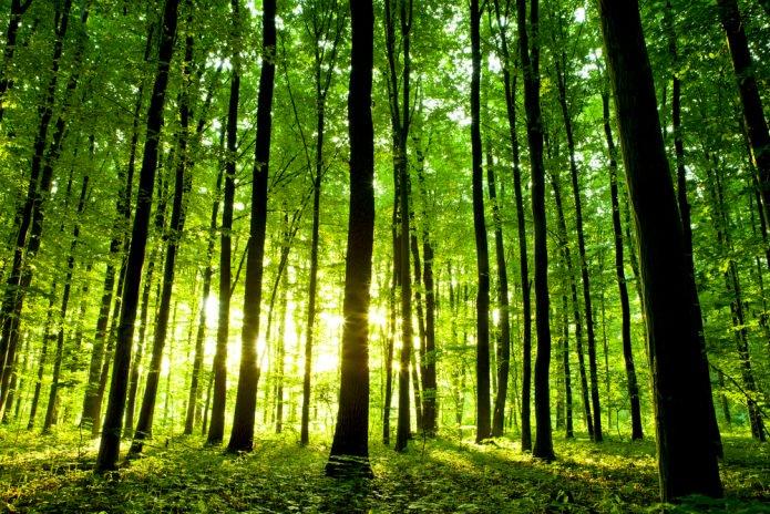 """Résultat de recherche d'images pour """"les arbres entre visible et invisible"""""""