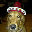 Home Alone: Golden Retriever With Hat & New Falkirk Mobile Fuel Drainage Service!