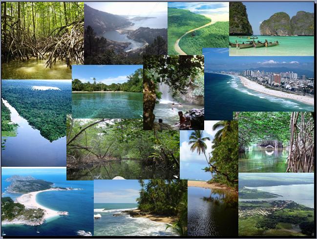 Imágenes Ecosistema Acuático