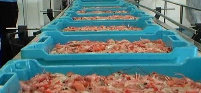 pescado mercurio españa cancer