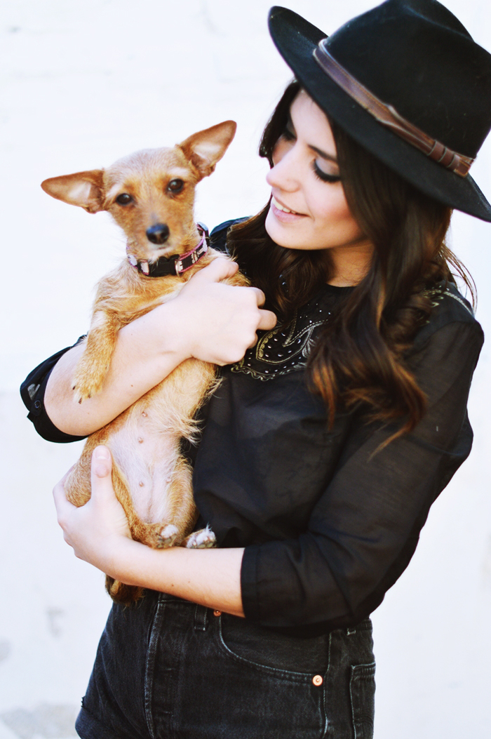 dulceida mascota perro