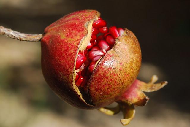 Kandungan nutrisi dan manfaat buah delima untuk kesehatan