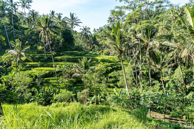 Gunung Kawi - Ubud - Bali