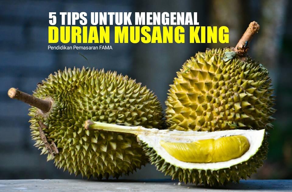 Tips Mengenal Durian Musang King