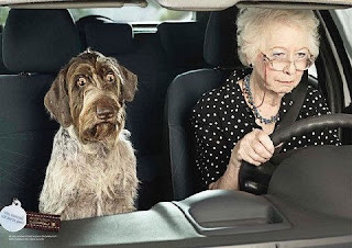 Funny Little Old Lady Driver Scared Dog Joke