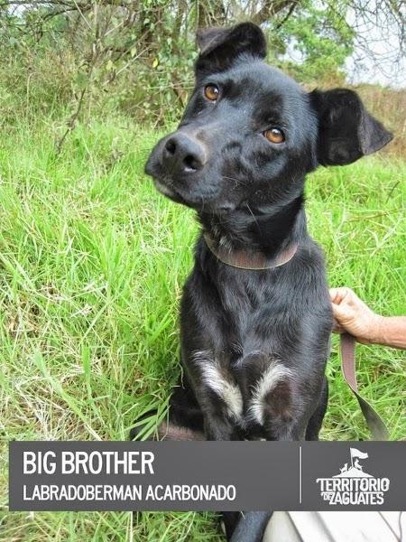 Caim Animal Rescue Network: Costa Rica :: Organization Saves