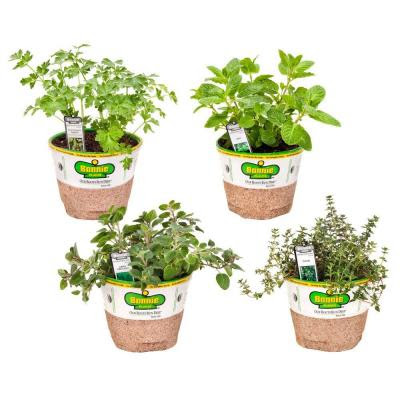 The Home Depot, Organic, Herbs, Dill, oregano, thyme, flat parsley, Edible Gardening
