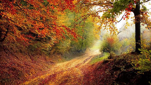 Route de Forêt en Automne - Fond d'écran en Full HD