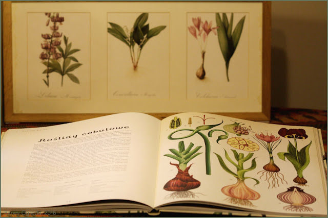 książkia Botanicum