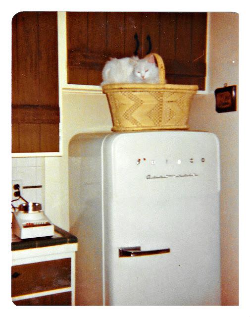 A vintage snapshot of a white cat sitting on a refrigerator in 1977 at 1776 Sweetwood Drive in Broadmoor, California