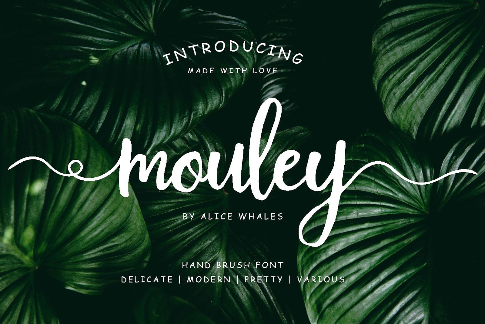 Mouley Is Modern Hand Brush Script Font Free Download