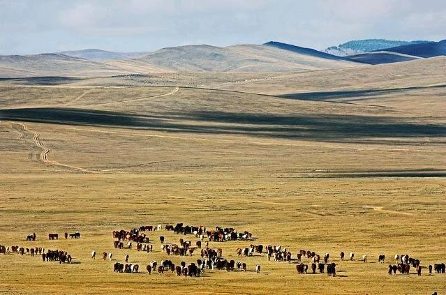 Chi viaggia impara Immagini dal mondo Mongolia