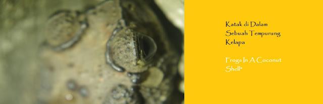 http://ketutrudi.blogspot.co.id/2018/02/katak-di-dalam-sebuah-tempurung-kelapa.html