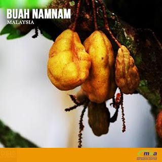 BUAH NANAM PENAWAR SAKIT BUAH PINGGANG