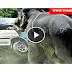 Shocking Video Elephant Attack National Park In Srilanka
