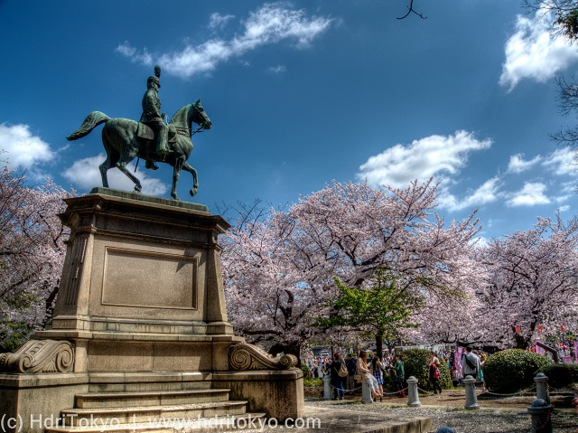 bronze statue of  a nobleman riding his horse. cherry blossoms blooming  by the statue. people view the blossoms.