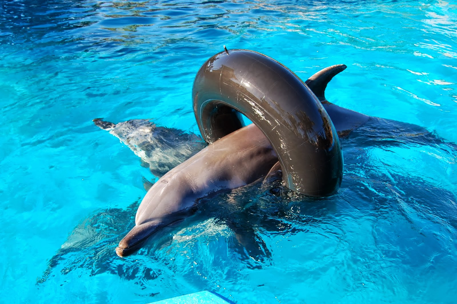 images of dolphins playing - photo #5