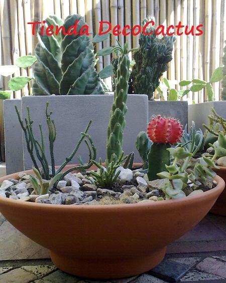 Cactus y suculentas en pailas tienda deco c for Cactus de exterior